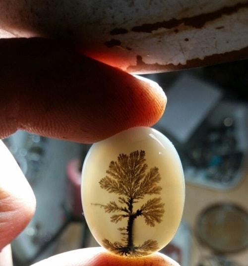 Dendritic-agate-tree-min سنگ شجر : پاسخ همه سوالات درباره انگشتر شجر + عکس شجر های خاص