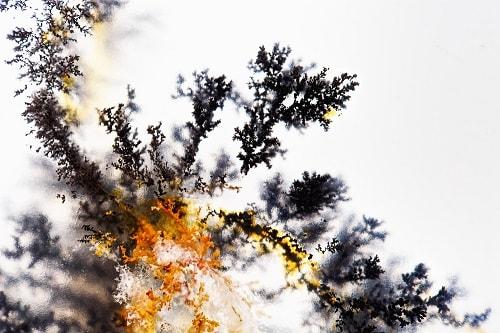 Dendritic-tree-min سنگ شجر : پاسخ همه سوالات درباره انگشتر شجر + عکس شجر های خاص